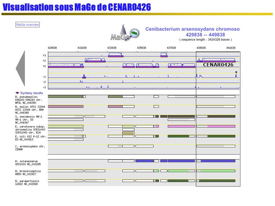 Visualisation sous MaGe de CENAR0426
