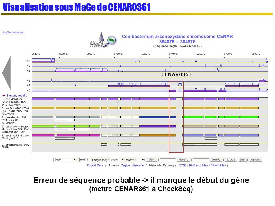 Visualisation sous MaGe de CENAR0361