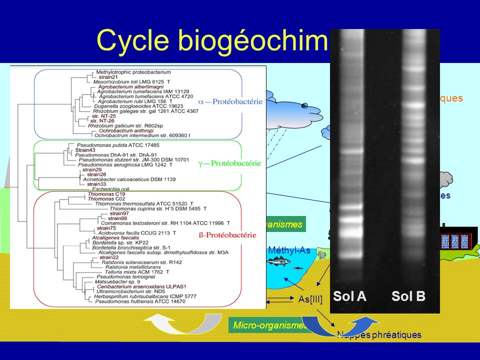 Cycle biogéochimique Sol A Sol B Sources naturelles