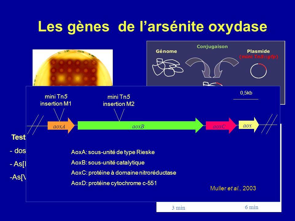 Les gènes de l'arsénite oxydase