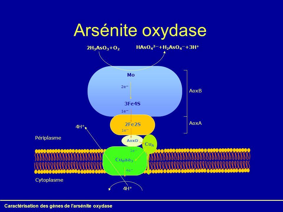 Arsénite oxydase Caractérisation des gènes de l'arsénite oxydase