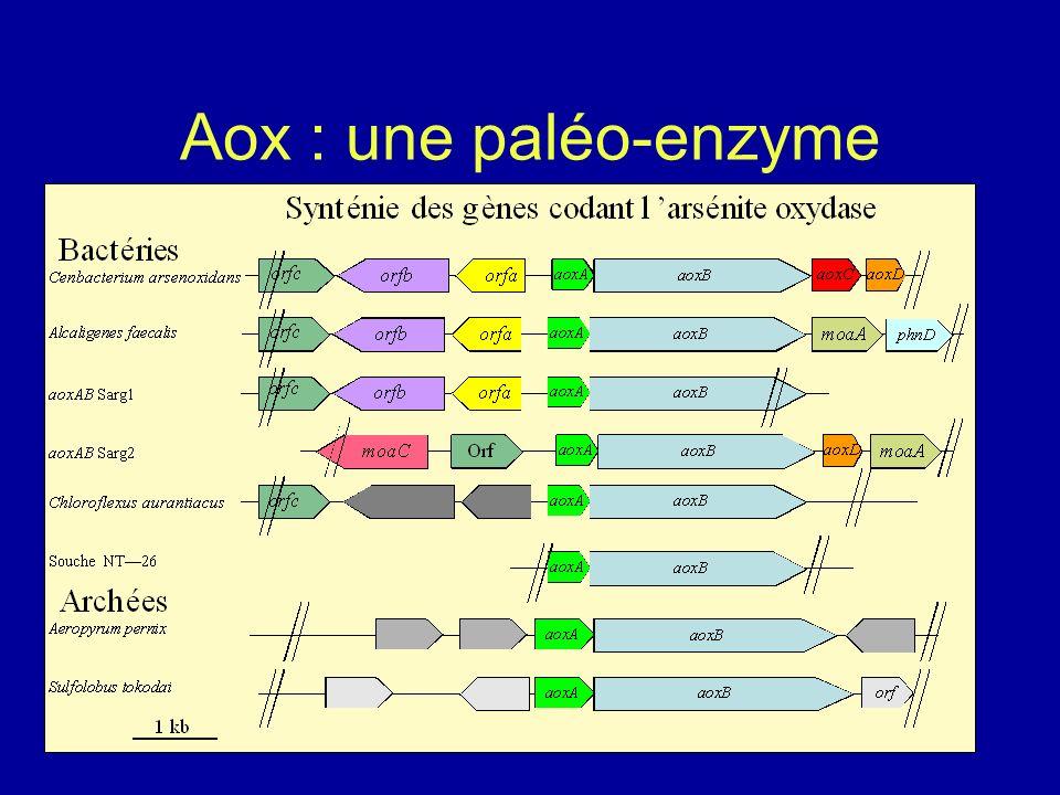Aox : une paléo-enzyme AoxA AoxB