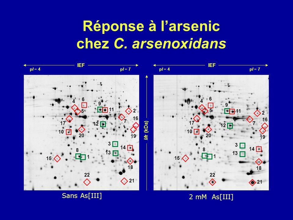Réponse à l'arsenic chez C. arsenoxidans