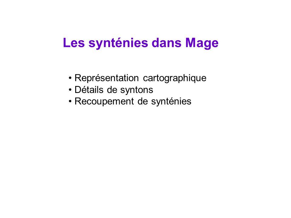Les synténies dans Mage