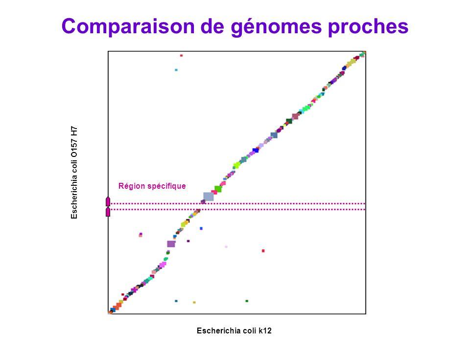 Comparaison de génomes proches