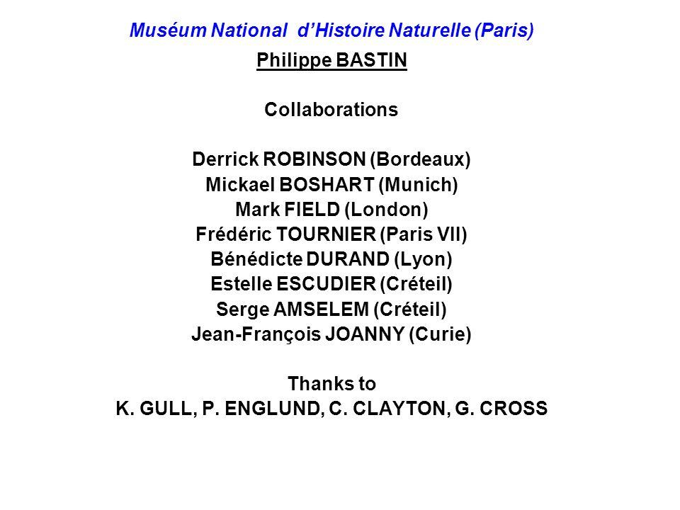 Muséum National d'Histoire Naturelle (Paris) Philippe BASTIN