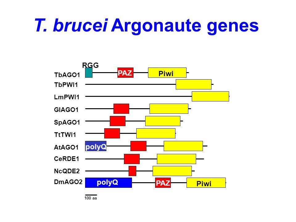 T. brucei Argonaute genes