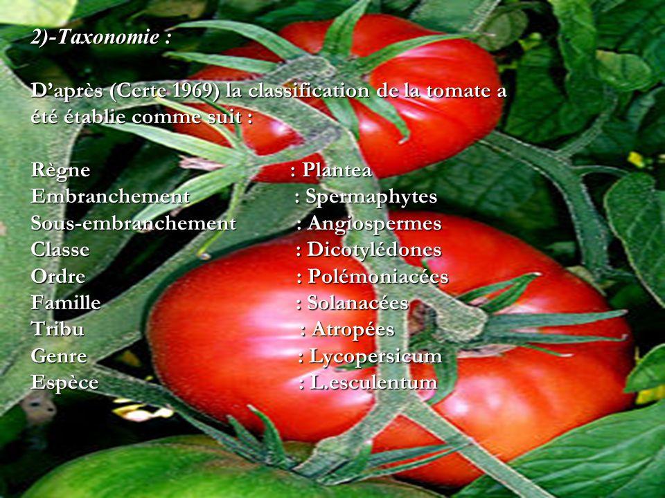2)-Taxonomie :D'après (Certe 1969) la classification de la tomate a. été établie comme suit : Règne : Plantea.