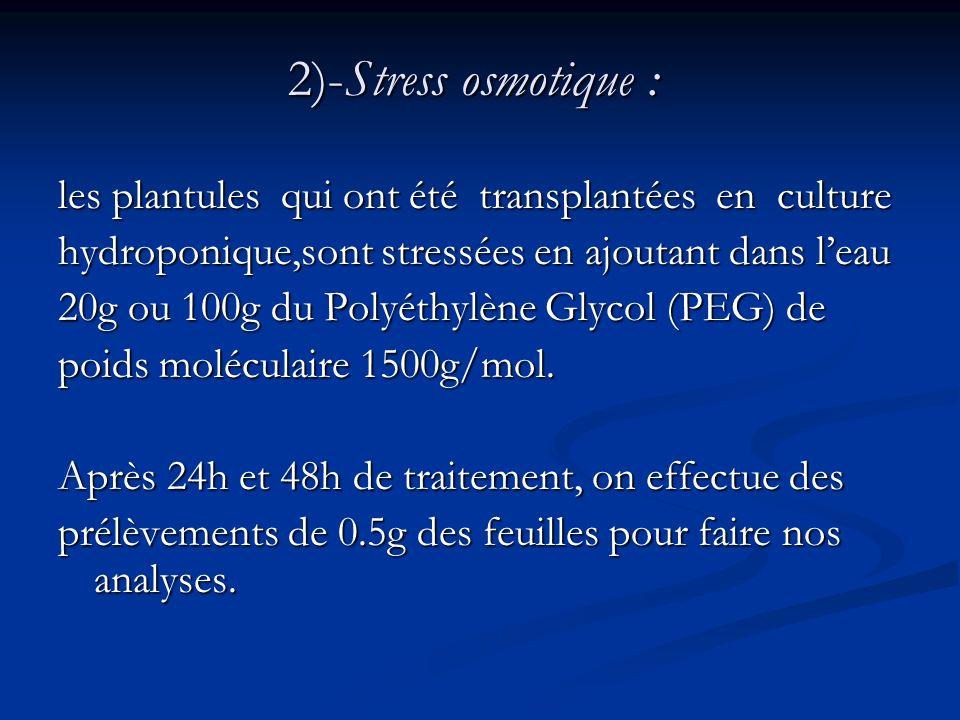 2)-Stress osmotique :les plantules qui ont été transplantées en culture. hydroponique,sont stressées en ajoutant dans l'eau.
