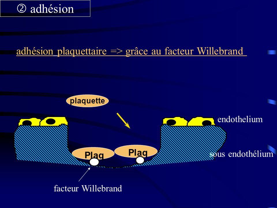  adhésion adhésion plaquettaire => grâce au facteur Willebrand