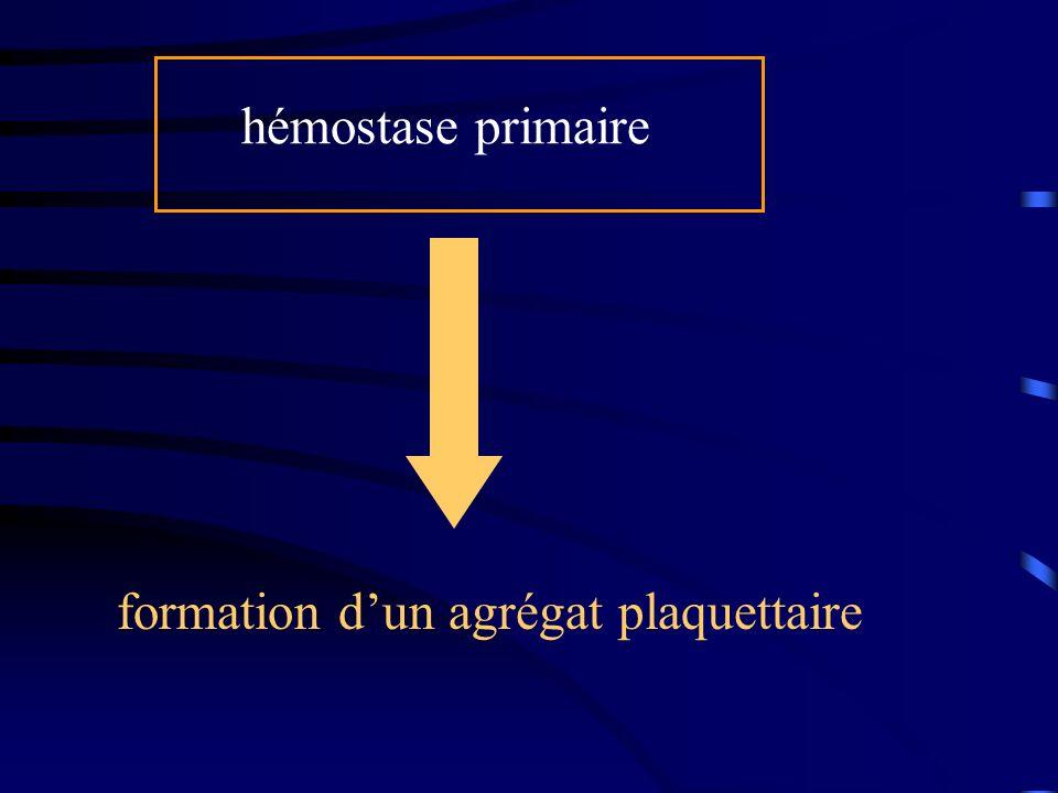 hémostase primaire formation d'un agrégat plaquettaire