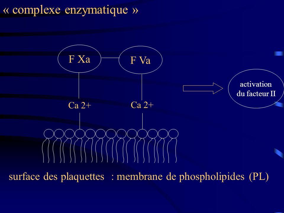 « complexe enzymatique »