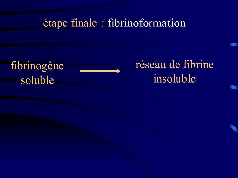 étape finale : fibrinoformation