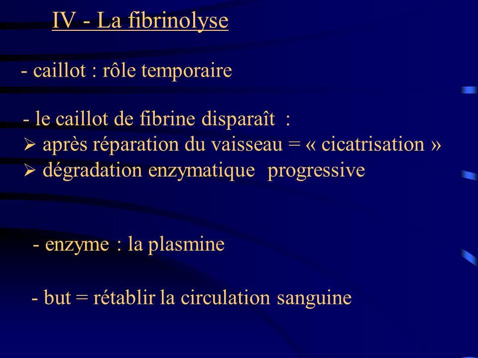 IV - La fibrinolyse - caillot : rôle temporaire