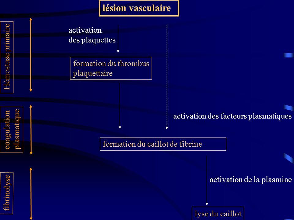 lésion vasculaire activation des plaquettes Hémostase primaire