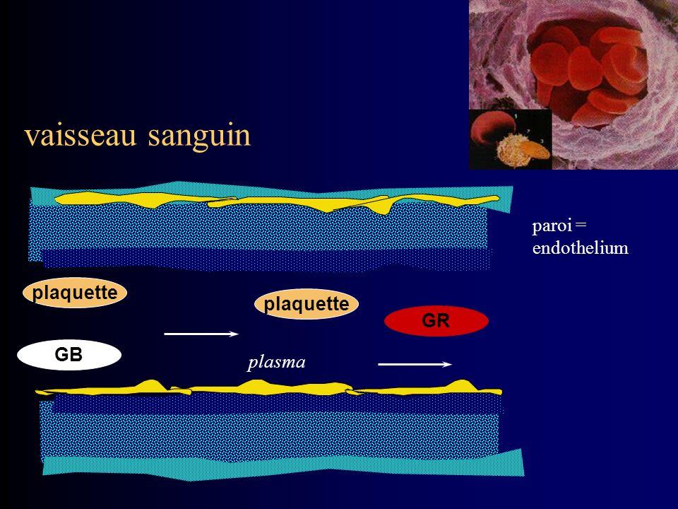 vaisseau sanguin paroi = endothelium plaquette plaquette GR GB plasma