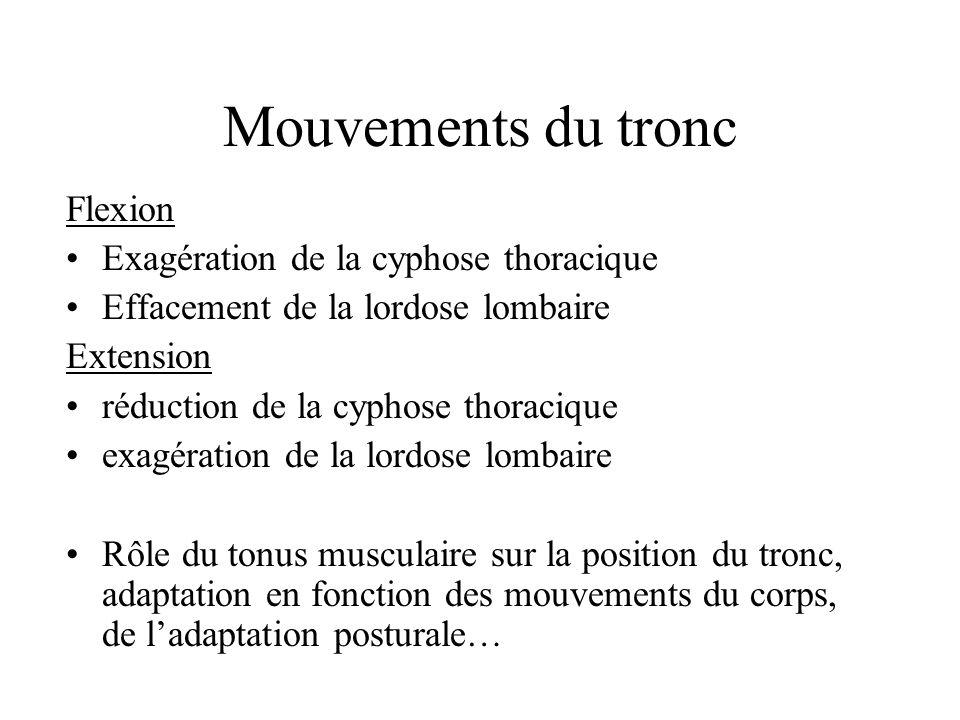 Mouvements du tronc Flexion Exagération de la cyphose thoracique