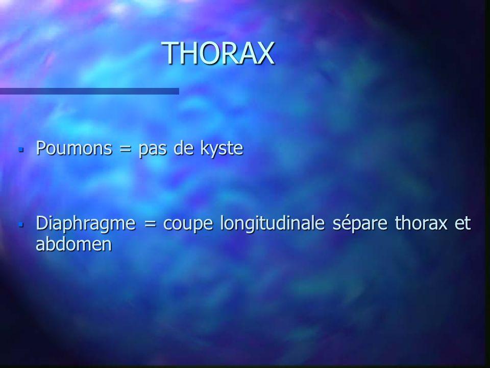 THORAX Poumons = pas de kyste