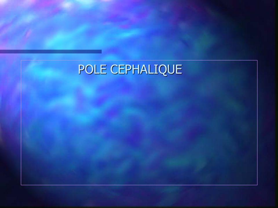 POLE CEPHALIQUE