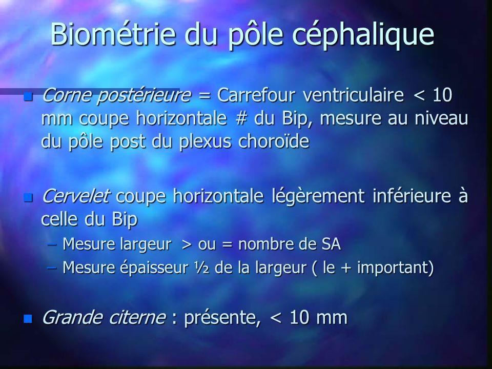 Biométrie du pôle céphalique