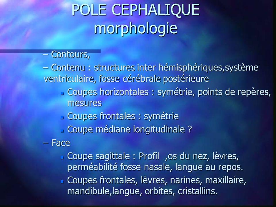 POLE CEPHALIQUE morphologie