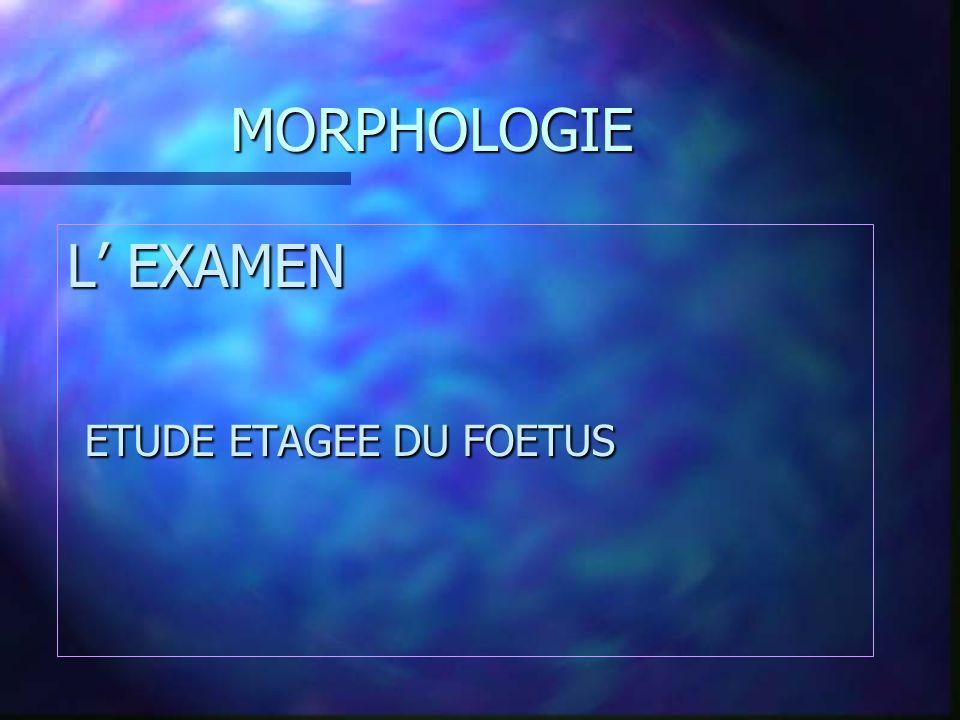 MORPHOLOGIE L' EXAMEN ETUDE ETAGEE DU FOETUS