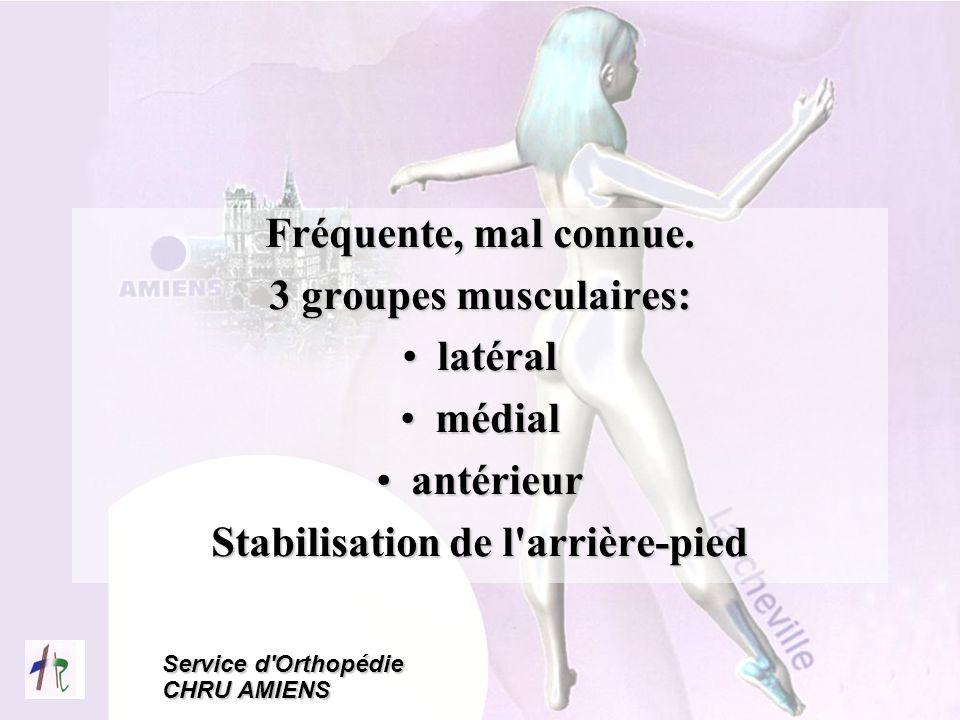 Stabilisation de l arrière-pied