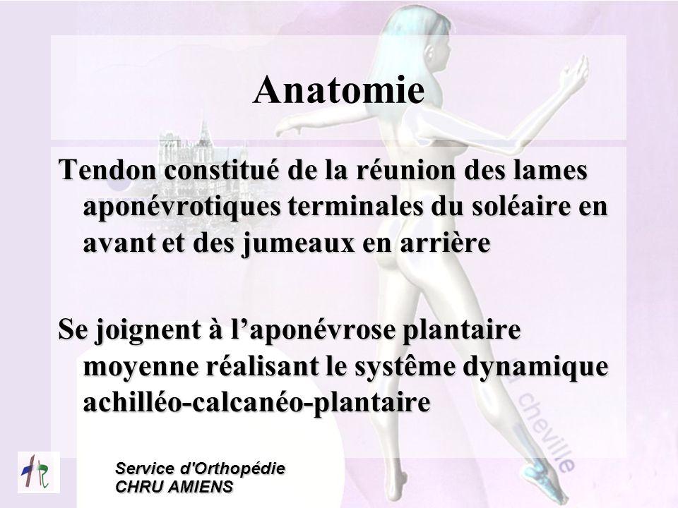 Anatomie Tendon constitué de la réunion des lames aponévrotiques terminales du soléaire en avant et des jumeaux en arrière.