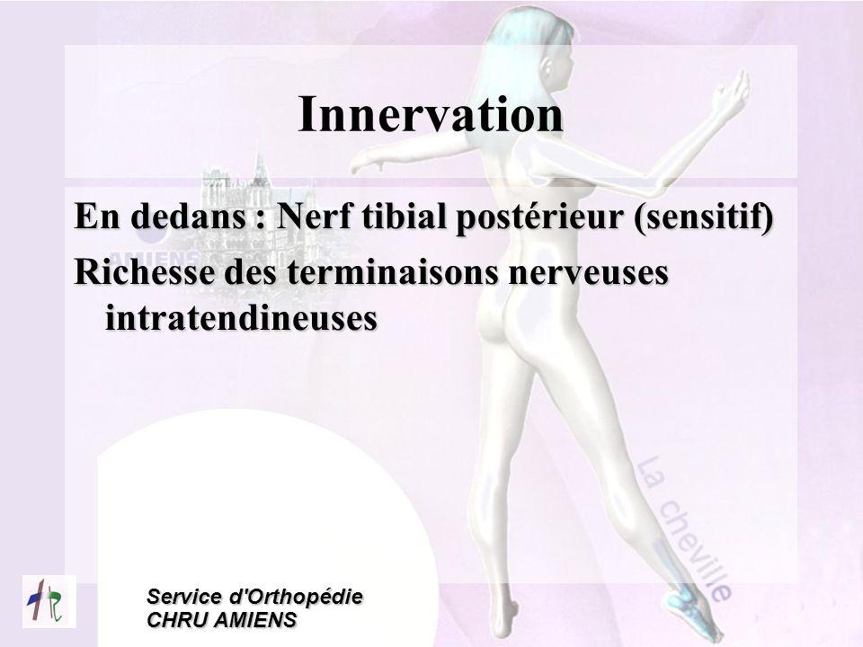 Innervation En dedans : Nerf tibial postérieur (sensitif)