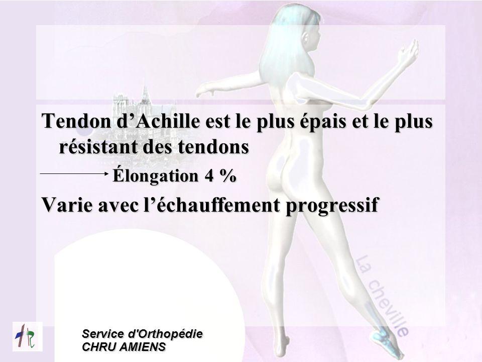 Tendon d'Achille est le plus épais et le plus résistant des tendons