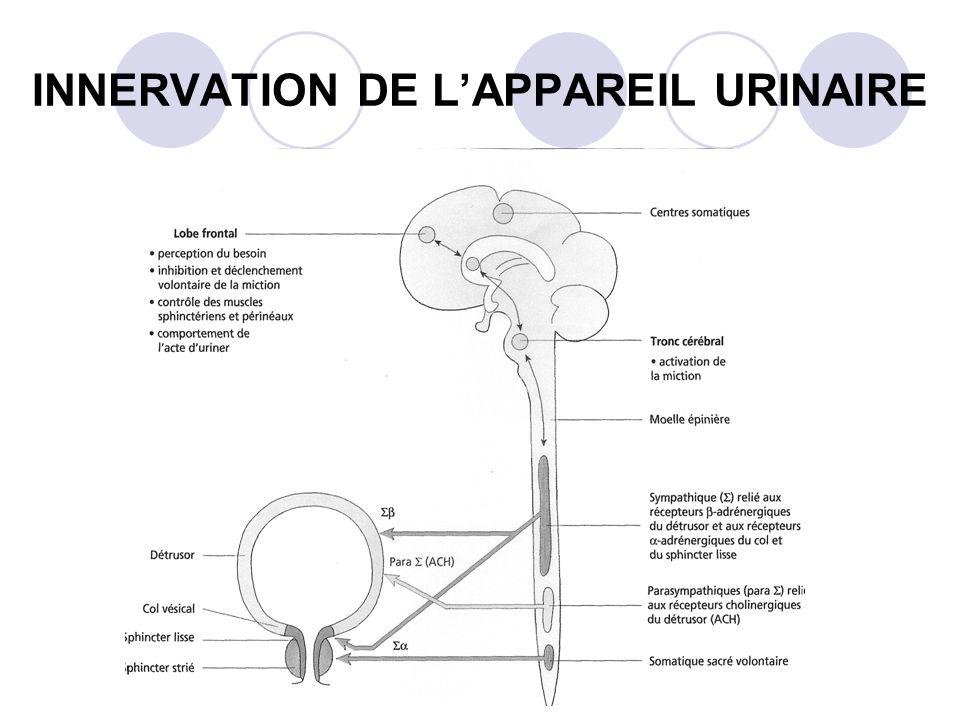 INNERVATION DE L'APPAREIL URINAIRE