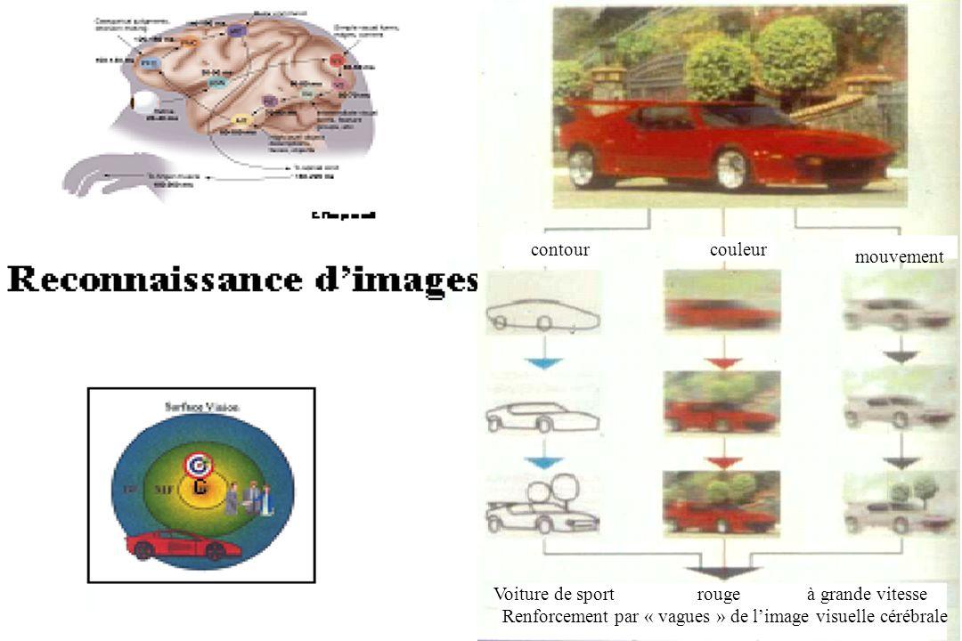 Renforcement par « vagues » de l'image visuelle cérébrale