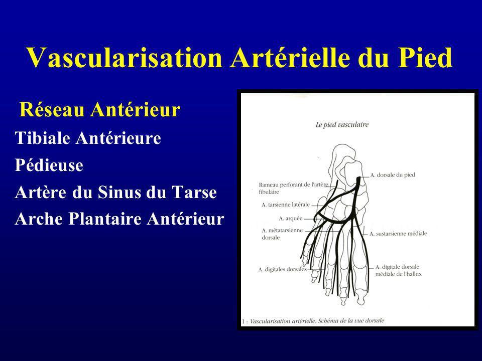 Vascularisation Artérielle du Pied