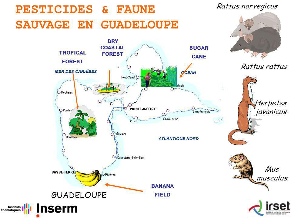 PESTICIDES & FAUNE SAUVAGE EN GUADELOUPE