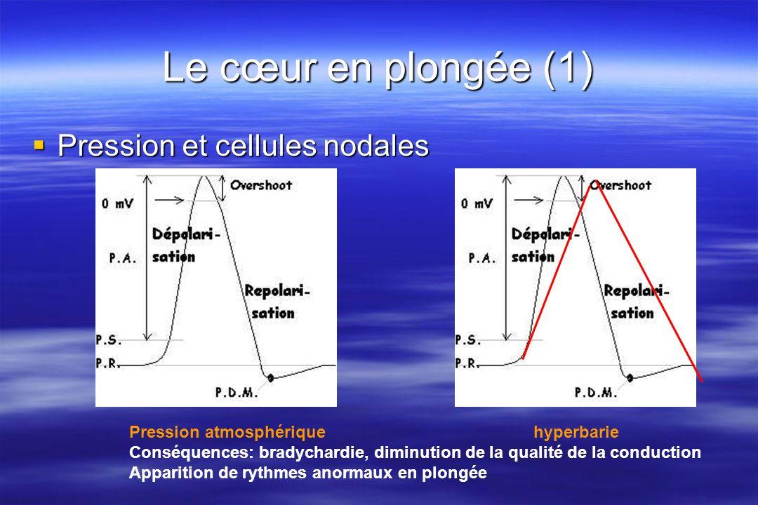 Le cœur en plongée (1) Pression et cellules nodales