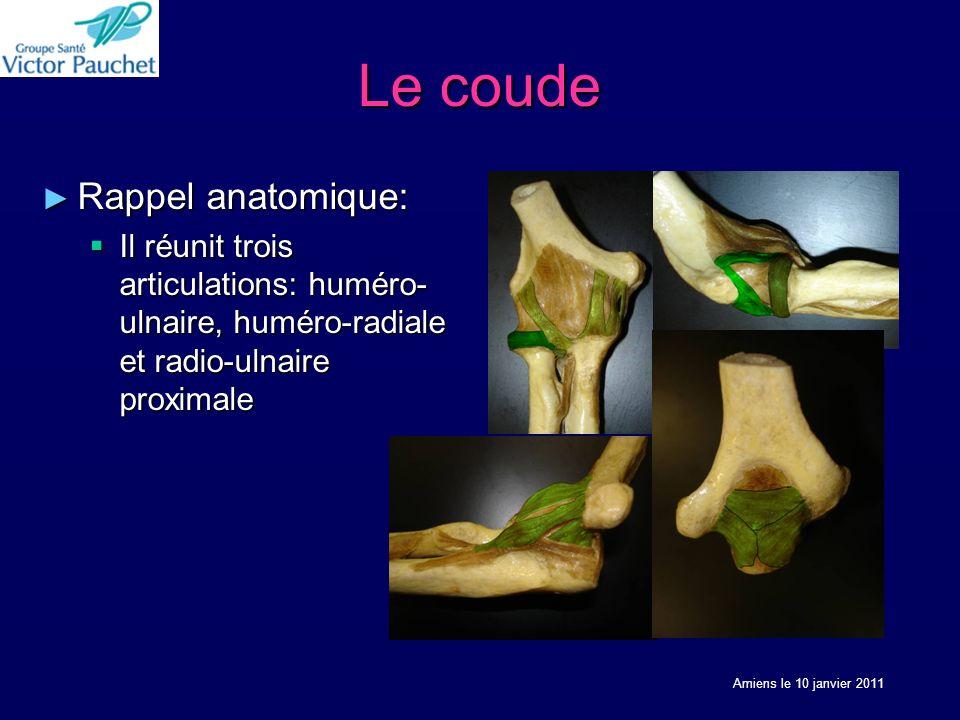 Le coude Rappel anatomique: