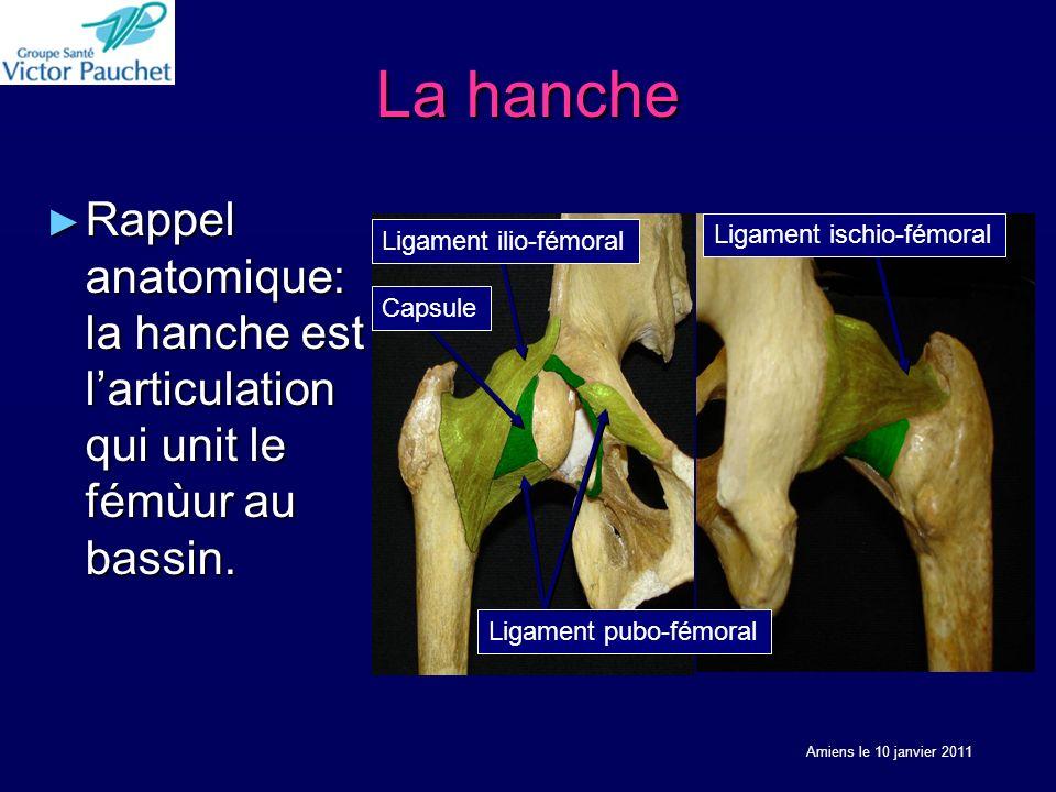 La hanche Rappel anatomique: la hanche est l'articulation qui unit le fémùur au bassin. Ligament ischio-fémoral.