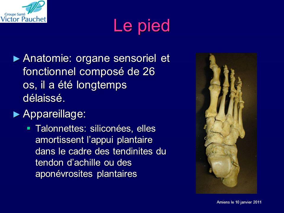 Le pied Anatomie: organe sensoriel et fonctionnel composé de 26 os, il a été longtemps délaissé. Appareillage: