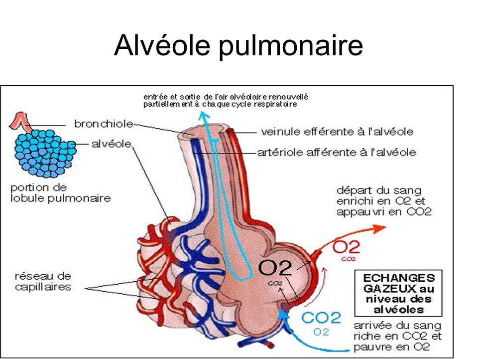 cours anatomie et physiologie humaine pdf