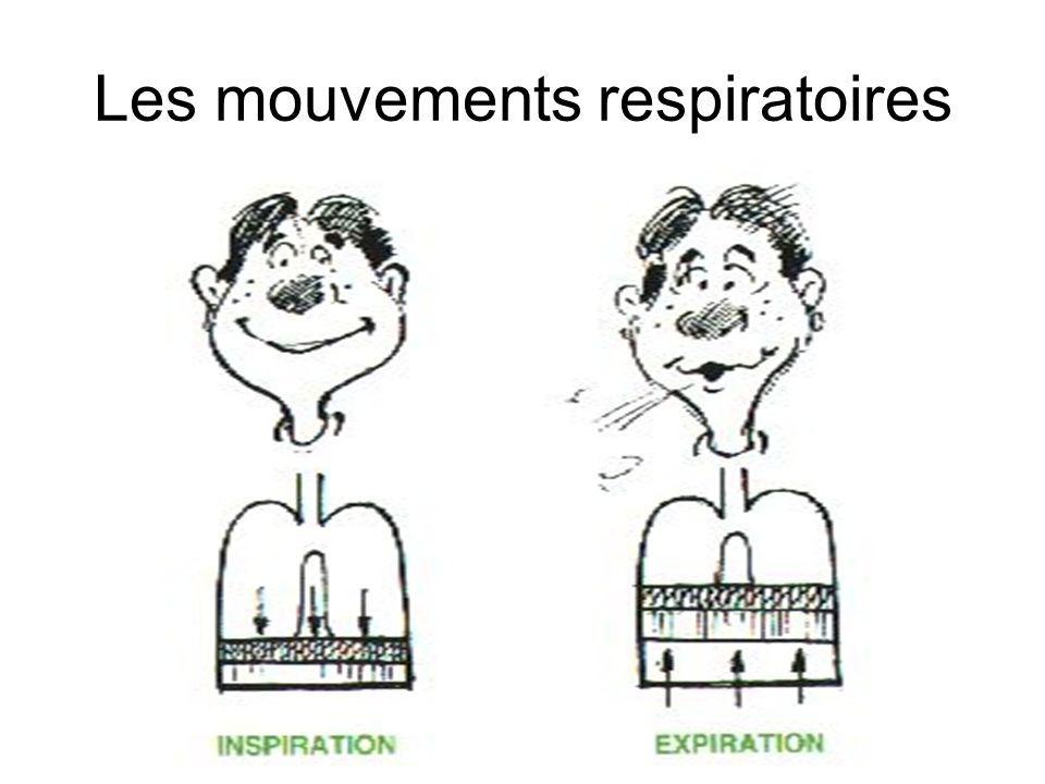 Les mouvements respiratoires