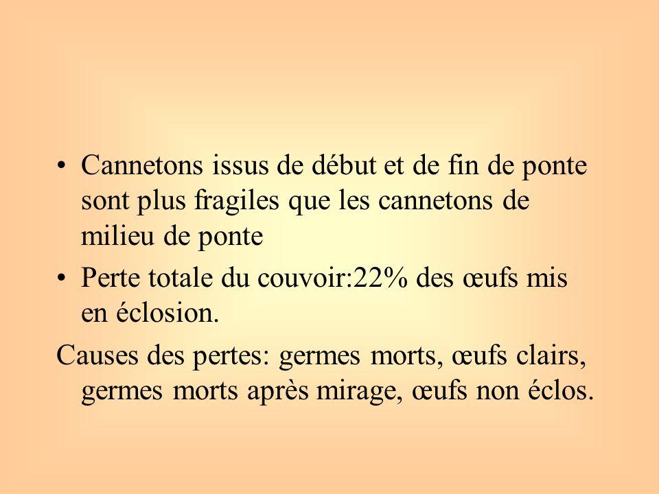 Cannetons issus de début et de fin de ponte sont plus fragiles que les cannetons de milieu de ponte