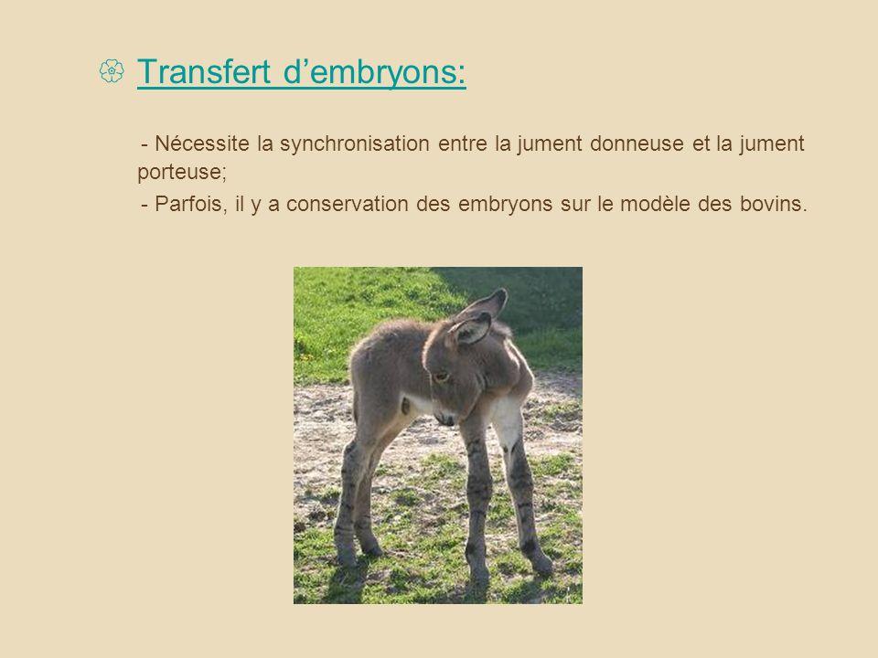 Transfert d'embryons: