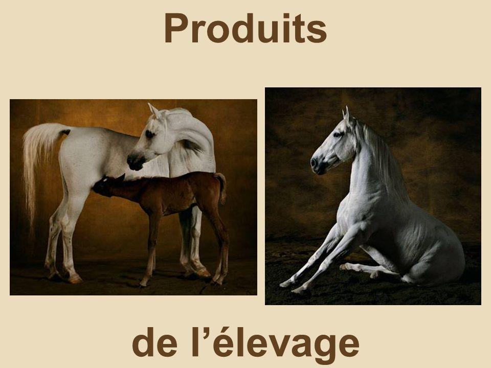 Produits de l'élevage