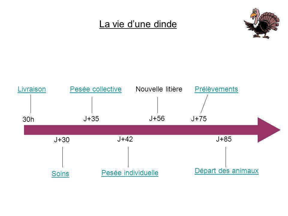 La vie d'une dinde Livraison 30h J+30 Soins J+35 Pesée collective J+42