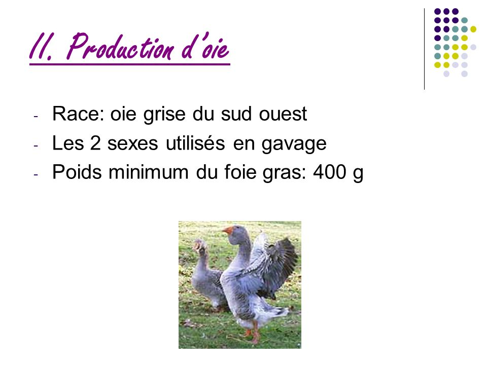 II. Production d'oie Race: oie grise du sud ouest