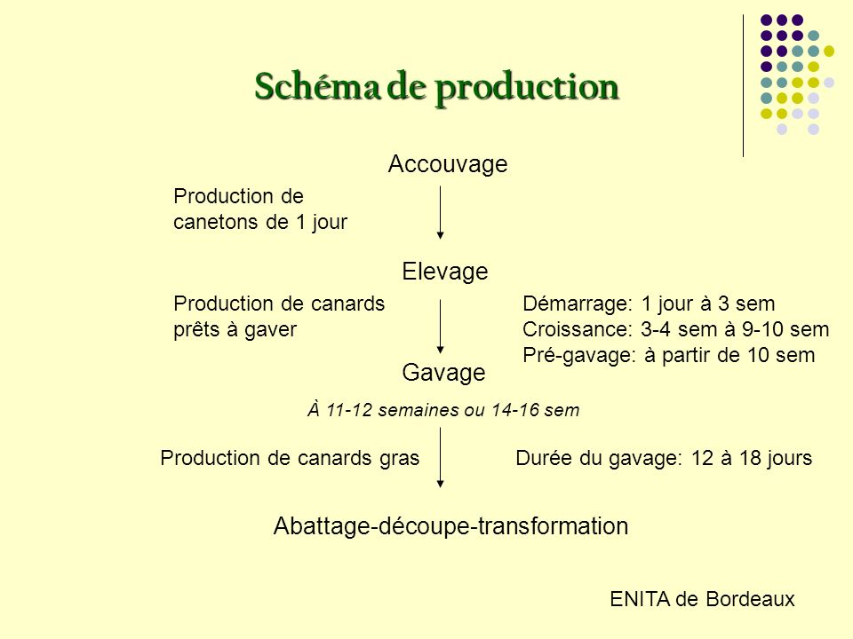 Schéma de production Accouvage Elevage Gavage