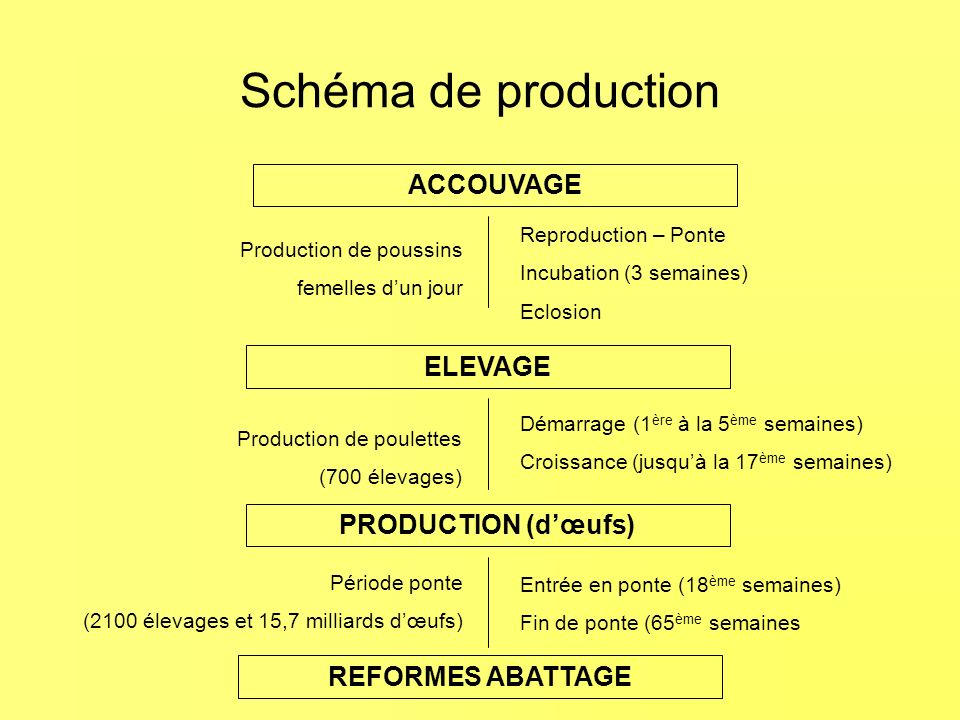 Schéma de production ACCOUVAGE ELEVAGE PRODUCTION (d'œufs)