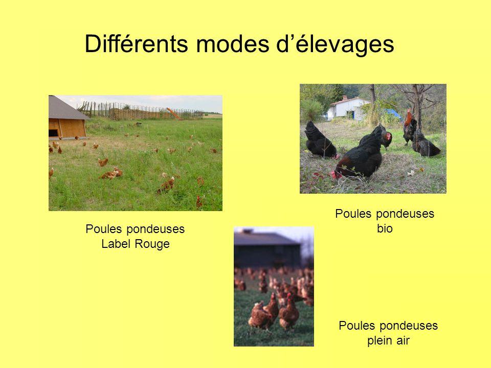 Différents modes d'élevages