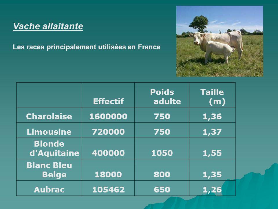 Vache allaitante Effectif Poids adulte Taille (m) Charolaise 1600000