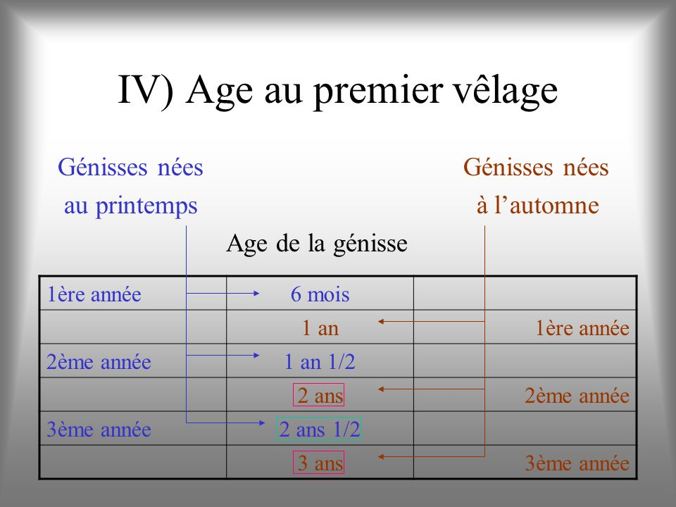 IV) Age au premier vêlage